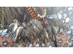 Espagne chasse au col-Palombes ets Grives
