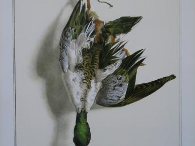 Le canard souchet d'Edouard Travies
