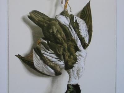 Le canard garrot d'Edouard Travies