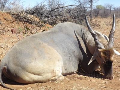 Séjour Chasse NAMIBIE